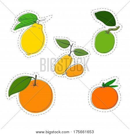 Vector color sticker set of citrus. Lemon orange mandarin lime kumquat. In vintage style