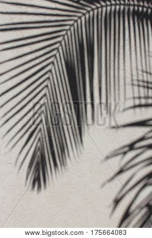 Soft focus shadows of curving palm frond cast on a textured stucco wall, background.