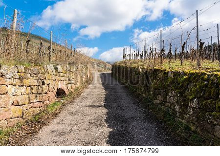 Uphill Cobblestone Path Vineyard Blue Sky Park Outdoors Walking Hiking European Germany Warm Light S