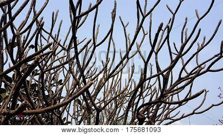 Tree Twigs sky and background sky .