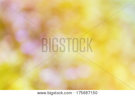 Fresh Summer Colour Orange Pink Yellow Tone Soft Bokeh Abstract Background