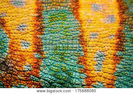 Close up of Four-horned Chameleon skin background Chamaeleo quadricornis