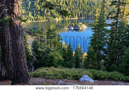 Pine Forest Surrounding Emerald Bay At Lake Tahoe, California, Usa