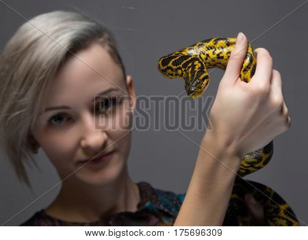 Young blond woman holding yellow anaconda on gray background