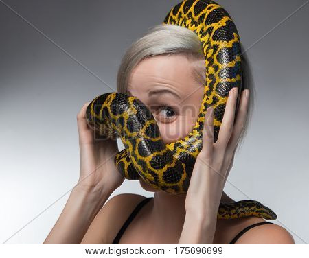 Blond woman and strangling yellow anaconda on gray background