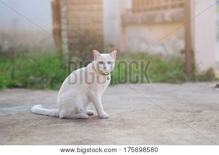 cute white cat sitting on the floor