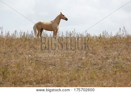 Horse outdoors standing in the field. Horizontal photo