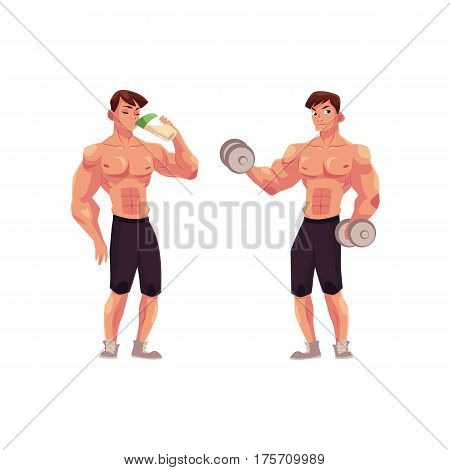 Man bodybuilder, weightlifter working out with dumbbells and drinking protein shake, cartoon vector illustration isolated on white background. Man bodybuilder with dumbbells and drinking protein