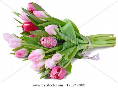 a bouquet of fifteen white tulips pink and red wrapped a pink ribbon lying on the table. isolated on white background