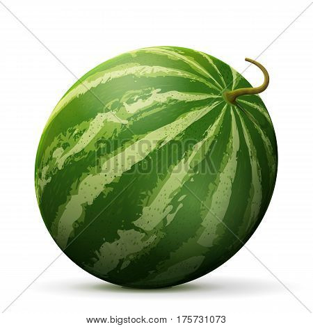 poster of Single watermelon fruit close up. Raw melon isolated on white background. Qualitative vector illustration about watermelon agriculture fruits cooking food gastronomy etc