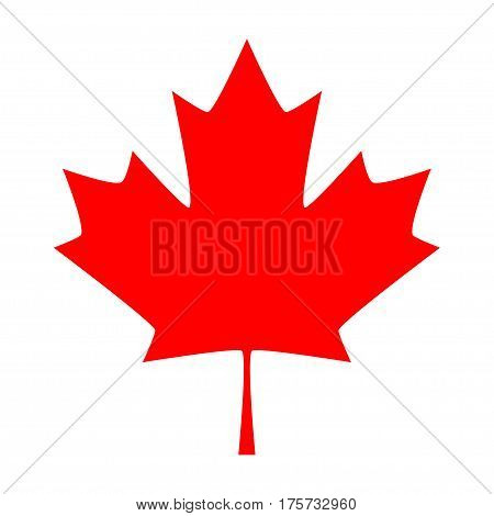 Maple leaf. Canada symbol maple leaf, vector