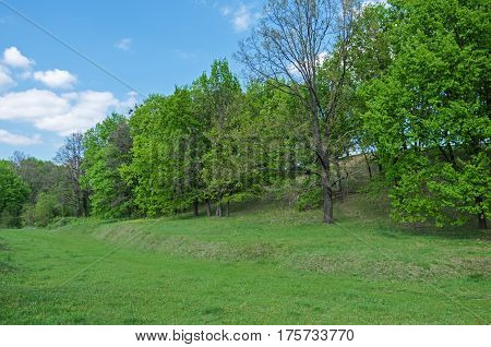 Deciduous trees growing in a ravine on a background of blue sky and clouds