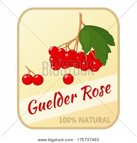 Vintage label with guelder rose isolated on white background in simple cartoon style. Vector illustration. Berries Collection.