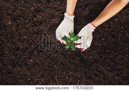 Woman hand planting a beautiful, green leaved plant on a natural, sandy backgroud. Camera from above, top view. Natural background for advertisements.