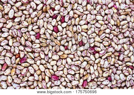 Cranberry  beans raw food as a background