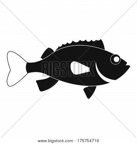 Sea bass fish icon. Simple illustration of sea bass fish vector icon for web