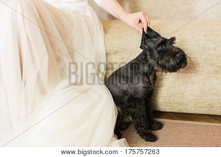 bride and her funny dog. the bride in a white dress and a black dog.