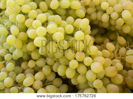 Grapes. Bunches of green grapes. Grapes on a tray agriculture market. (Selective focus)