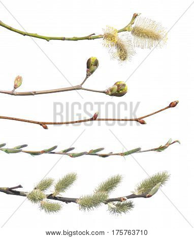 Set of spring branches isolated on white background