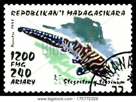 STAVROPOL RUSSIA - February 17 2017: a stamp printed by Malagasy shows Young zebra shark ( Stegostoma fascatum) circa 1993