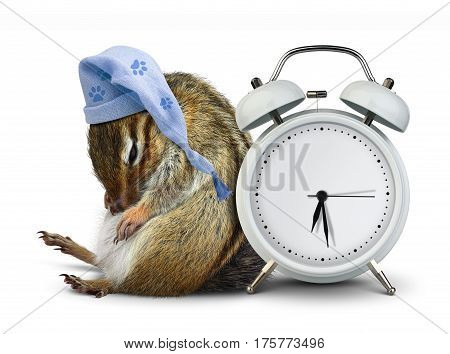 Funny animal chipmunk sleep with clock and sleeping hat