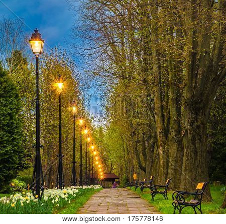 Urban alley in botanical garden Iasi Moldavia Romania.