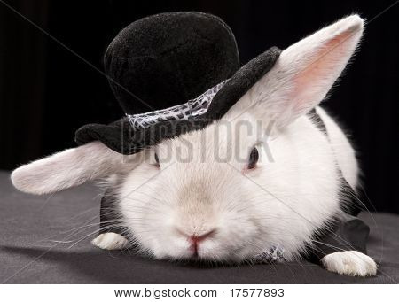 Portrait of cute rabbit in top hat and bow-tie. Isolated on dark background