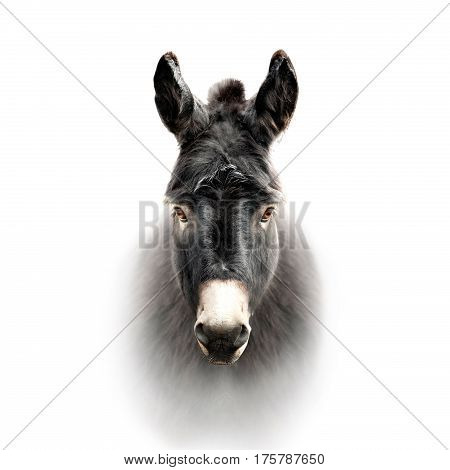 The donkey face isolated on the white