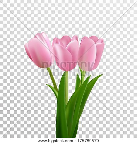 Tulips. Pink vector tulips bouquet isolated. Flowers in different shapes.