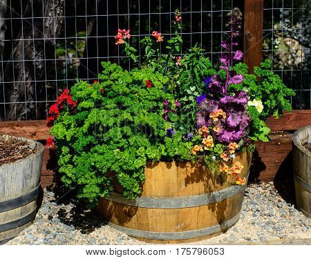 Colorful Garden Flowers With The Pots In The Spring