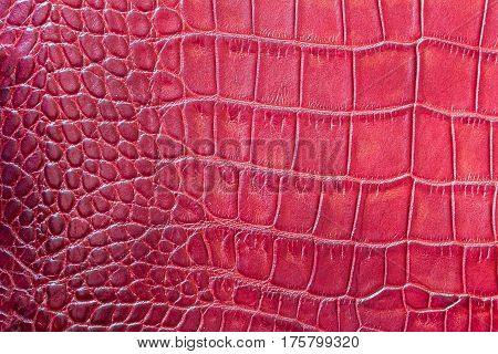 Red fashion scales macro exotic background, embossed under the skin of a reptile, crocodile. Texture genuine leather close-up, trend. For backdrop, substrate, composition use. With place for your text