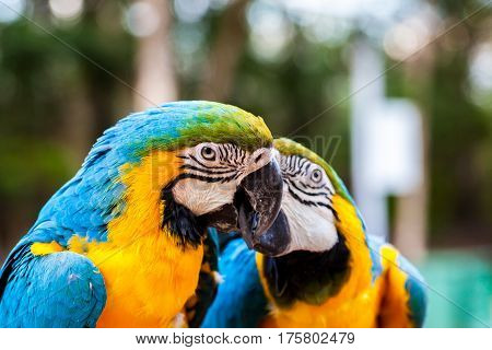 parrot, bird, macaw, animal, beak blue yellow green