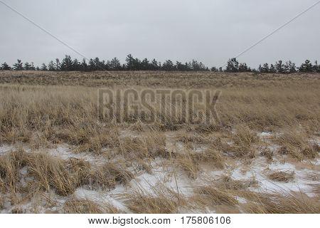 Dunes and dune grass in Sleeping Bear Dunes National Lakeshore, Michigan.