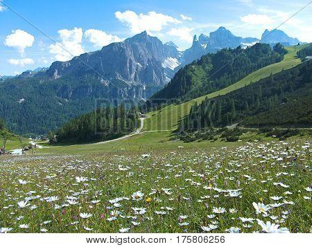 flower house on high mountain blue sky view in dolomites dolomiti dolomiten Italy