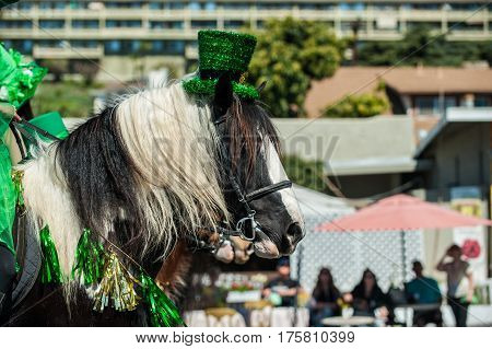 Large black and white Clydesdale horse head wearing St Patricks Day hat.