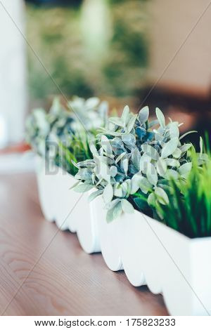 Green plant in the white pot on the table, home decoration