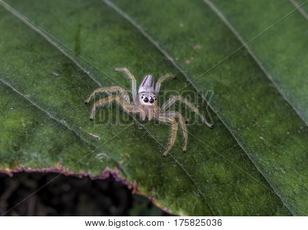 The white spider is placed on the floor of a green leaf.