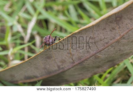 Insect insects that sneak behind dried leaves ( Hymenoptera )