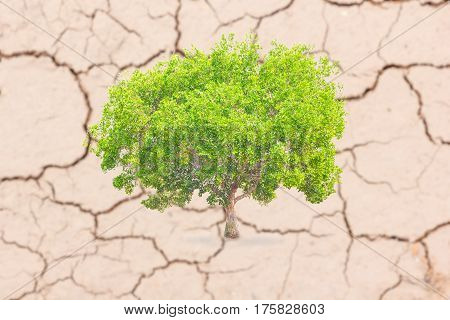 Green trees on the cracked earth/Cracks in the land in rural areas Thailand