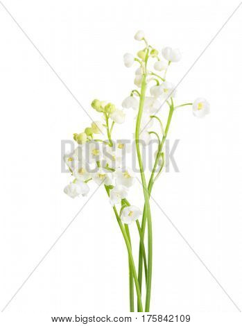 Few sprigs of Lily of the Valley isolated on white background.