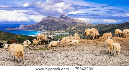 Traditional Greece series.  landscapes of Crete island with sheep, sea and mountains