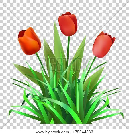 Green grass with tulips. Flowers. Nature.Vector  illustration