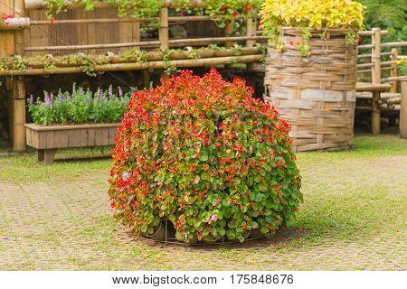 Colorful Of Petunia Flowers On Flowerpot In Garden