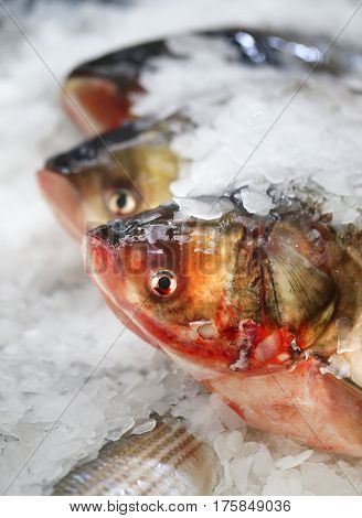 Photo of macro of large fish with ice on the counter