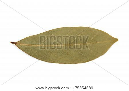 Bay laurel leaf isolated on a white background