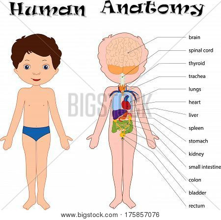 Boy Unclothed. Human Anatomy For Kids