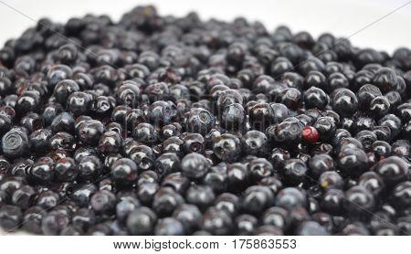 Close up view on organic blueberry in beautiful garden background. Vaccinium myrtillus is a species of shrub with edible fruit of blue color commonly called bilberry whortleberry European blueberry