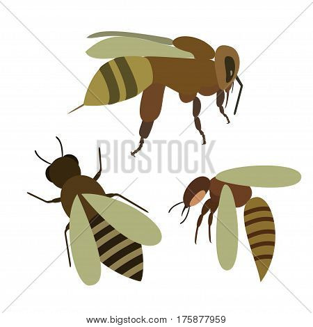 Set of bee, wasp vector illustration, honeybee isolated on white background.