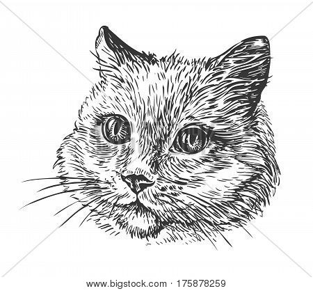 Hand-drawn portrait of cat. Sketch vector illustration isolated on white background