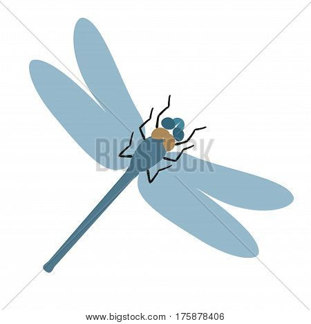 Dragonfly vector illustration, color dragonfly isolated on white background.